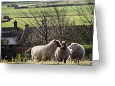 Three Sheep In A Field With Stone Greeting Card
