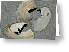 Three Shells Greeting Card