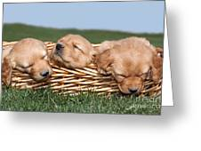 Three Sleeping Puppy Dogs In Basket Greeting Card