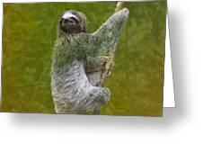 Three-toed Sloth Climbing Greeting Card