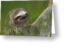 Three-toed Sloth Greeting Card