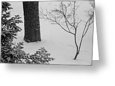 Three Trees In Snow Greeting Card
