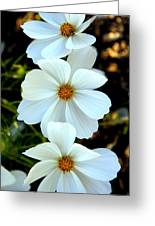 Three White Flowers Greeting Card