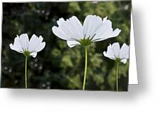 Three Wildflowers Greeting Card