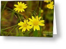 Three Yellow Amigos  Greeting Card