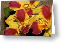 Three Yellow And Red Orchids Greeting Card