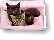 Threee Kittens In A Pink And White Basket Greeting Card