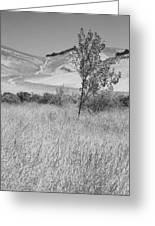 Through The Tall Grasses Greeting Card