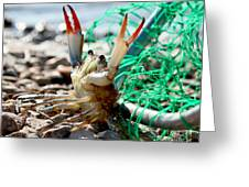 Crab Throw Me Something Mister Greeting Card