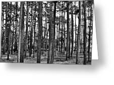 Thru The Pines Greeting Card