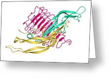 Thyroid-stimulating Hormone Molecule Greeting Card
