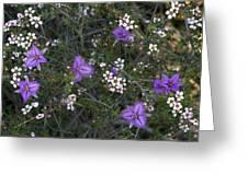 Thysanotus Patersonii And Leptospermum Greeting Card
