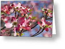 Tickled Pink Dogwood Greeting Card