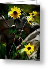 Tickseed Sunflowers Greeting Card