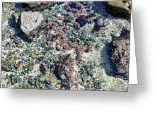 Tide Pool Greeting Card