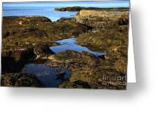 Tidepool In Maine Greeting Card