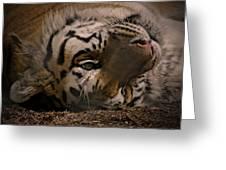 Tiger 3 Greeting Card