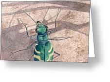Tiger Beetle Greeting Card
