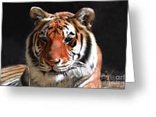 Tiger Blue Eyes Greeting Card