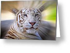 Tiger Blur Greeting Card