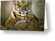 Tiger Cub On A Log Greeting Card