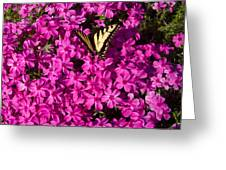 Tiger In The Phlox 5 Greeting Card