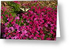 Tiger In The Phlox 6 Greeting Card