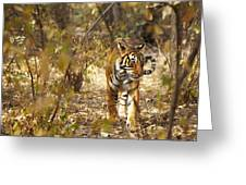 Tiger In The Undergrowth At Ranthambore Greeting Card