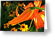Tiger Lily Bud And Bloom Greeting Card