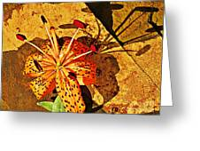 Tiger Lily Still Life  Greeting Card
