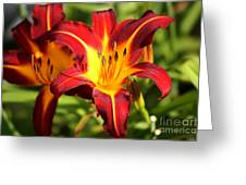 Tiger Lily0226 Greeting Card