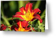 Tiger Lily0239 Greeting Card