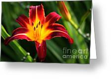 Tiger Lily0263 Greeting Card