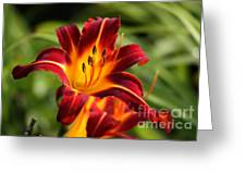Tiger Lily0272 Greeting Card