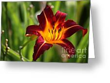 Tiger Lily0275 Greeting Card