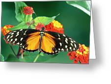 Tiger Longwing Heliconius Hecale Greeting Card