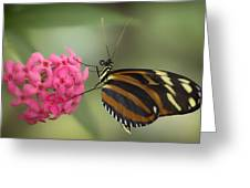 Tiger Longwing On Flower Greeting Card