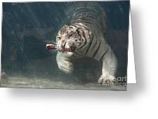 Tiger Shark Greeting Card by Buck Forester