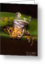 Tiger-stripe Monkey Frog Greeting Card