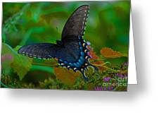 Tiger Swallowtail Butterfly Female Greeting Card