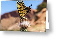 Tiger Swallowtail Butterfly In The Desert Greeting Card