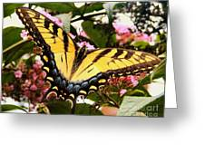 Tiger Tail Greeting Card
