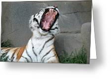 Tiger Yawn Greeting Card