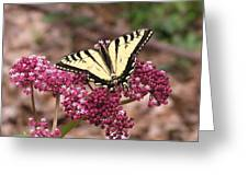 Tigertale Butterfly Greeting Card
