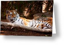 Tigress And Cubs Greeting Card