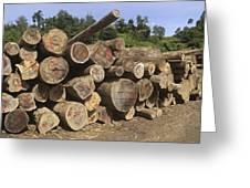 Timber At A Logging Area, Danum Valley Greeting Card