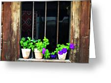 Time Worn Window With Bright Flowers Greeting Card