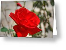 Timeless Red Beauty Greeting Card