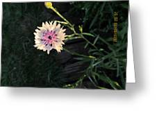 Tiny And Delicate Greeting Card