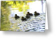Tiny Baby Ducks Greeting Card